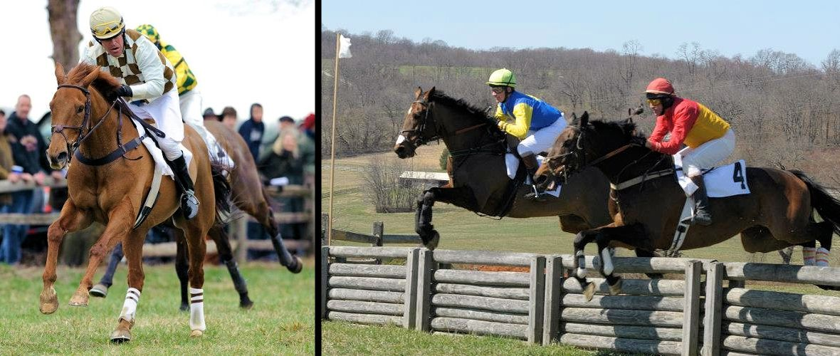Cheshire Hounds Point to Point - March 29, 2015